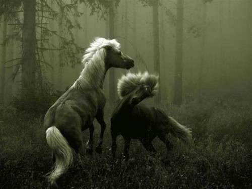 اروع واجمل الخيول في صور horses7.jpg