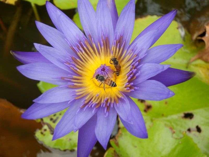 das tägliche Blumenbild darf nicht fehlen