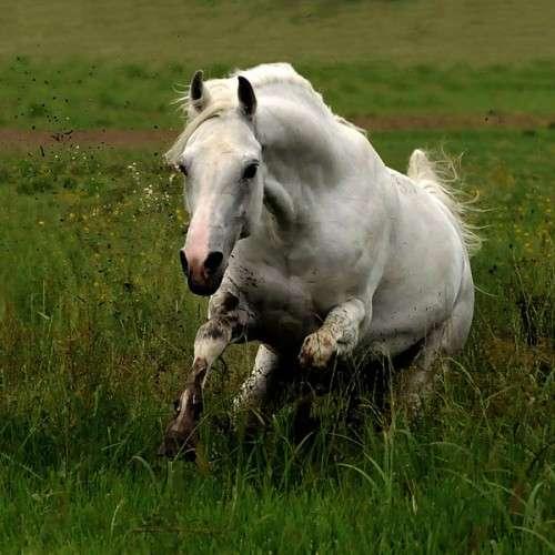 اروع واجمل الخيول في صور horses6.jpg